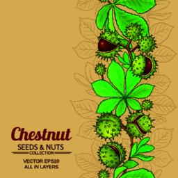 chestnut vector background Vector