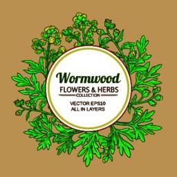 wormwood vector frame Vector