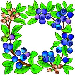blueberry vector frame Vector