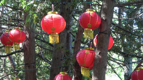 Glowing Lanterns in tree tops.Close up. In sun light Footage