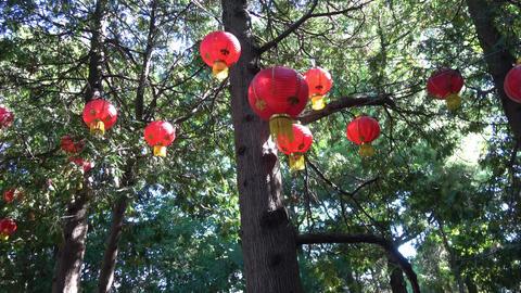 Glowing Lanterns in tree tops.Camera pan left Footage