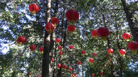 Glowing lanterns in tree tops. Camera zoom out Footage