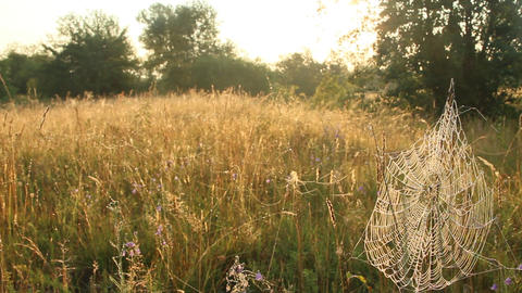Summer landscape with field of grass and cobwebs in sun light at dawn Live Action