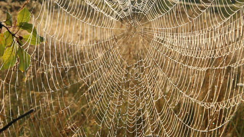 Spider's web closeup with drops of dew at dawn. House of spider Archivo
