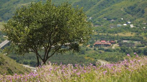 Beautiful violet field flowers close up, medicinal plants harvesting, herbal tea Live Action
