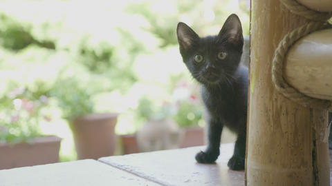 Portrait of curious funny black baby cat staring outside in the garden Footage