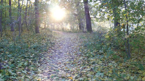 He goes on a path in the woods covered with fallen leaves beyond the sun is seen Footage