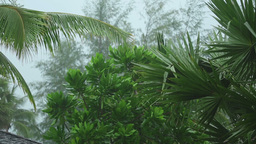 Tropical downpour, slow motion Footage