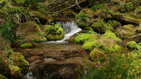 Mountain stream TimeLapse1 Live Action