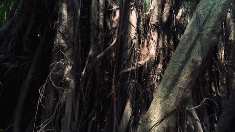 Lighting and Textures of a Tropical Jungle Footage