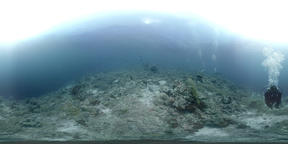 360 vr divers swimming on a coral reef VR 360° Video