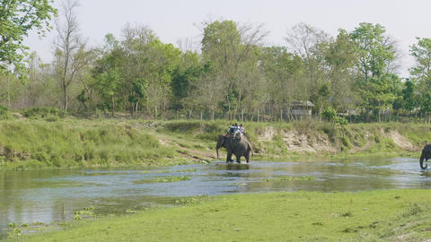 Elephant safari with tourists in jungle, national park in Chaitwan, Nepal Footage