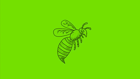Wasp Flying Side Drawing 2D Animation Animation