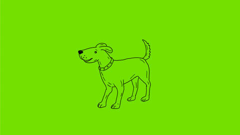 Dog Wagging Tail Drawing 2D Animation Animation