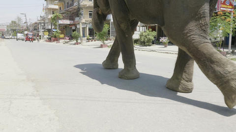 Elephant walks on the street of the city in asia Footage