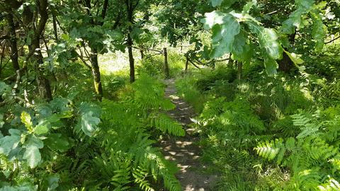 Walking Down a Green Woodland Path Footage