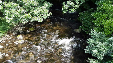 Running Stream With Overhanging Trees Live Action