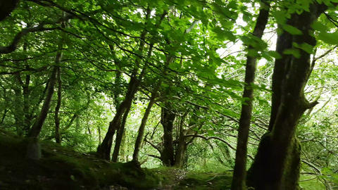 Walking Through a Woodland Forest Live Action