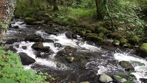 Woodland Stream 2 Live Action