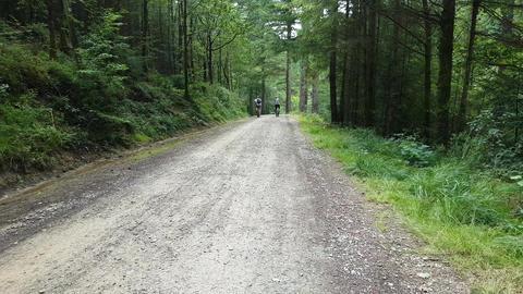 Cycling along woodland path Footage