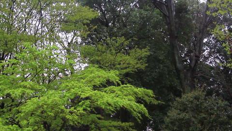 東京 世田ヶ谷 蘆花公園 雨が降っている 揺れる木々 ビデオ