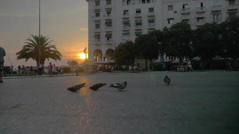 Pigeons flying away in the city at sunset Footage