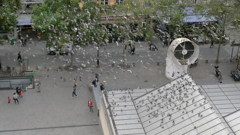 A great number of pigeons flying around square in Paris Footage