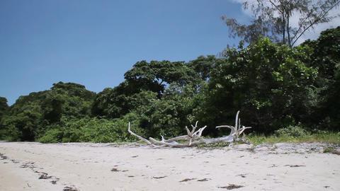 オーストラリア ケアンズ グリーン島 枯れた木 ビデオ