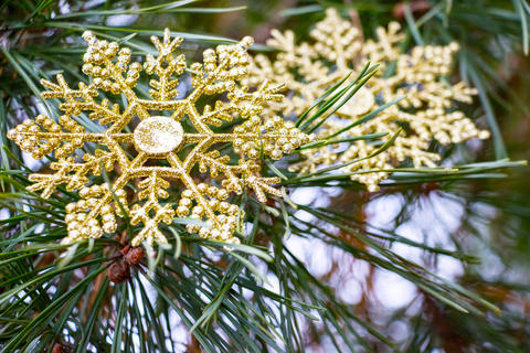 Snowflakes lie on the branch of a Christmas tree Fotografía