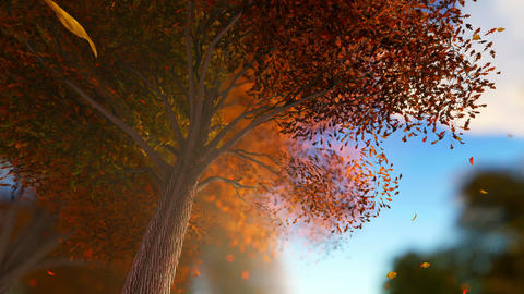 Falling leaves in autumn forest at sunny weather Animation