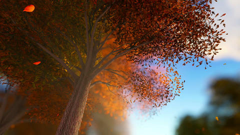 Falling leaves in autumn forest at sunny weather, Stock Animation