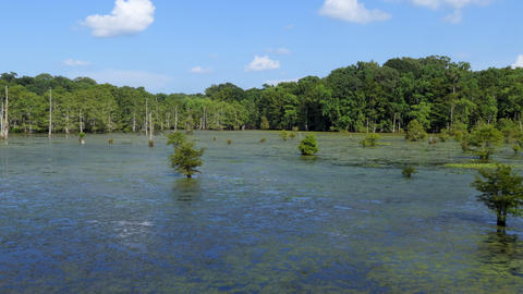 Louisiana Natural Landscape With Forest At Chicot State Park GIF