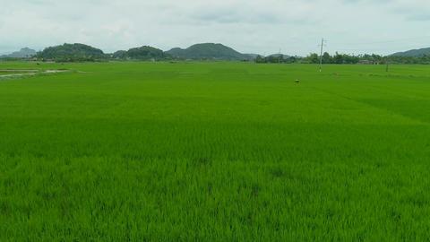 Rice Paddy at Tuyet Tinh Coc, Hai Phong, Vietnam Archivo