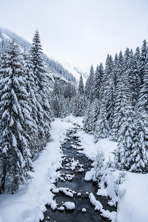 Beautiful winter landscape with snow covered trees Fotografía