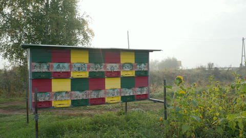 Behive in sunflower field on misty autumn morning, traditional Slovene painted ビデオ
