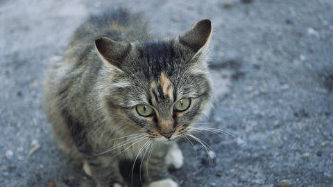 A cat sits on the sidewalk watching birds Footage