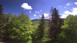 Nature stock video footage