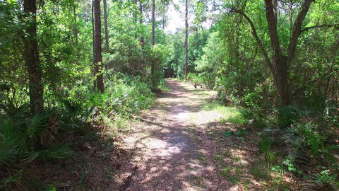 Aerial of heavily wooded forest and hiking trail in Central Florida Live Action