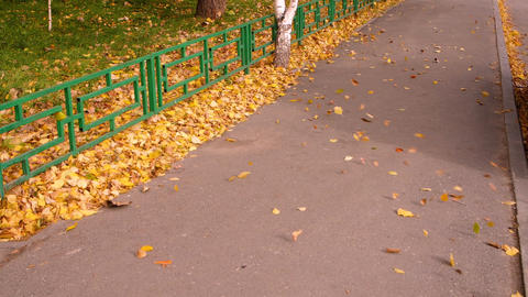 Wind blow falling leaves at footpath in autumn city. Leaves fall slow motion Footage