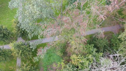 Aerial Autumn Trees
