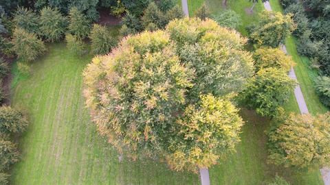 Aerial Autumn Trees 0