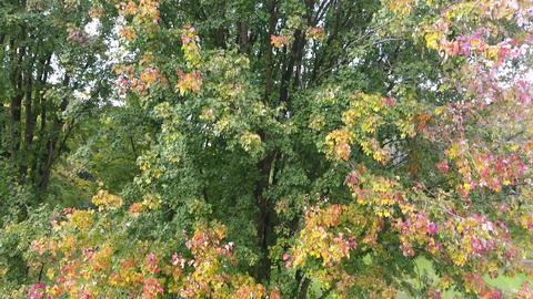 Aerial Autumn Trees 1