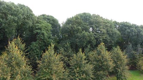 Aerial Autumn Trees 2