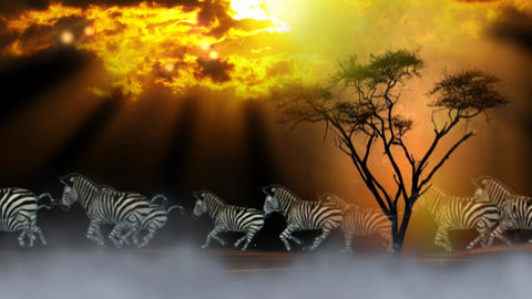 HERD OF ZEBRA IN TWILIGHT CG動画