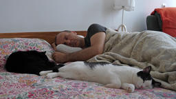 Afternoon nap. Man and two cats are sleeping Live Action