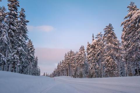Snowy Road in the Winter Forest Fotografía