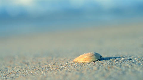 small yellow shell sand beach waves sea Footage