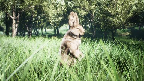 Little cute wild rabbit run away and hiding in the grass. 3D Rendering Photo