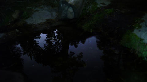 Stars Reflections 05 Tilt Down Creek in Forest Footage