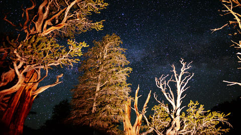 Ancient Forest Milkyway 04 Timelapse 3 Axis Dolly Pan Bristlecone Pine Footage